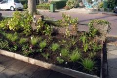 Mix van halfschaduw planten en zonminnende exemplaren.