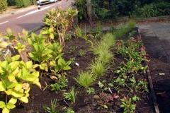 De planten in de border voor zijn erin!