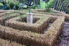 Buxus helaas moeten rooien in labyrint.
