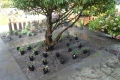 Ook de voortuin: heester opgeknipt, tegels eruit, grond verbeterd en planten staan klaar..