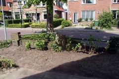 Alleen de hortensia's mogen blijven. Straks komt de nieuwe beplanting.