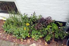 Najaar = planttijd. Net van de kweker en staan klaar voor het inplanten.